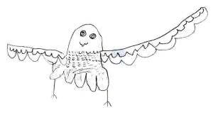The pupils' drawing of a peregrine falcon