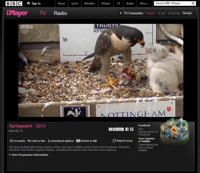 falcons_springwatch