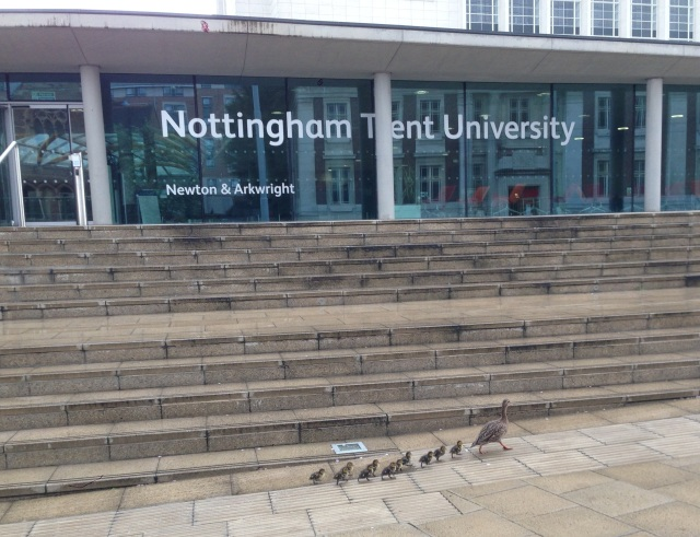 More feathery chicks at the NTU Newton building