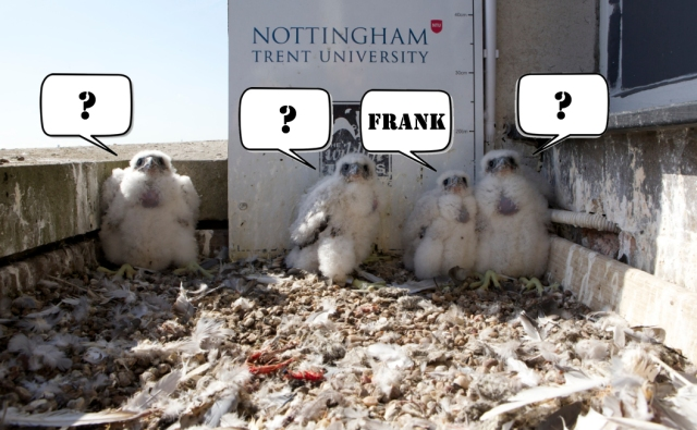 Name our falcons